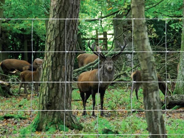 Tailed deer in the forest with hinge joint fence perimeter protection.