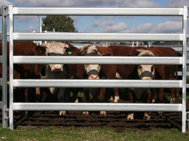 Many cows are in oval rail panels.