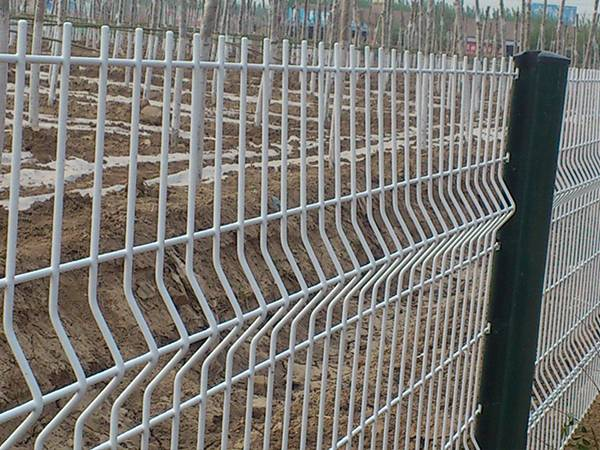 Large area of trees in rows are surrounded by the security fencing .